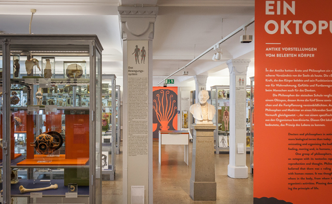 "The exhibition ""The Soul is an Octopus. Ancient Ideas of Life and the Body""was situated in Rudolf Virchow's Präparatesaal in the Medical History Museum 