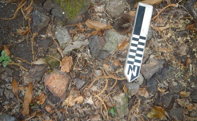 Iron slag and furnace fragments, North-Western Elba | Photo: R. A. Eser/ © R. A. Eser