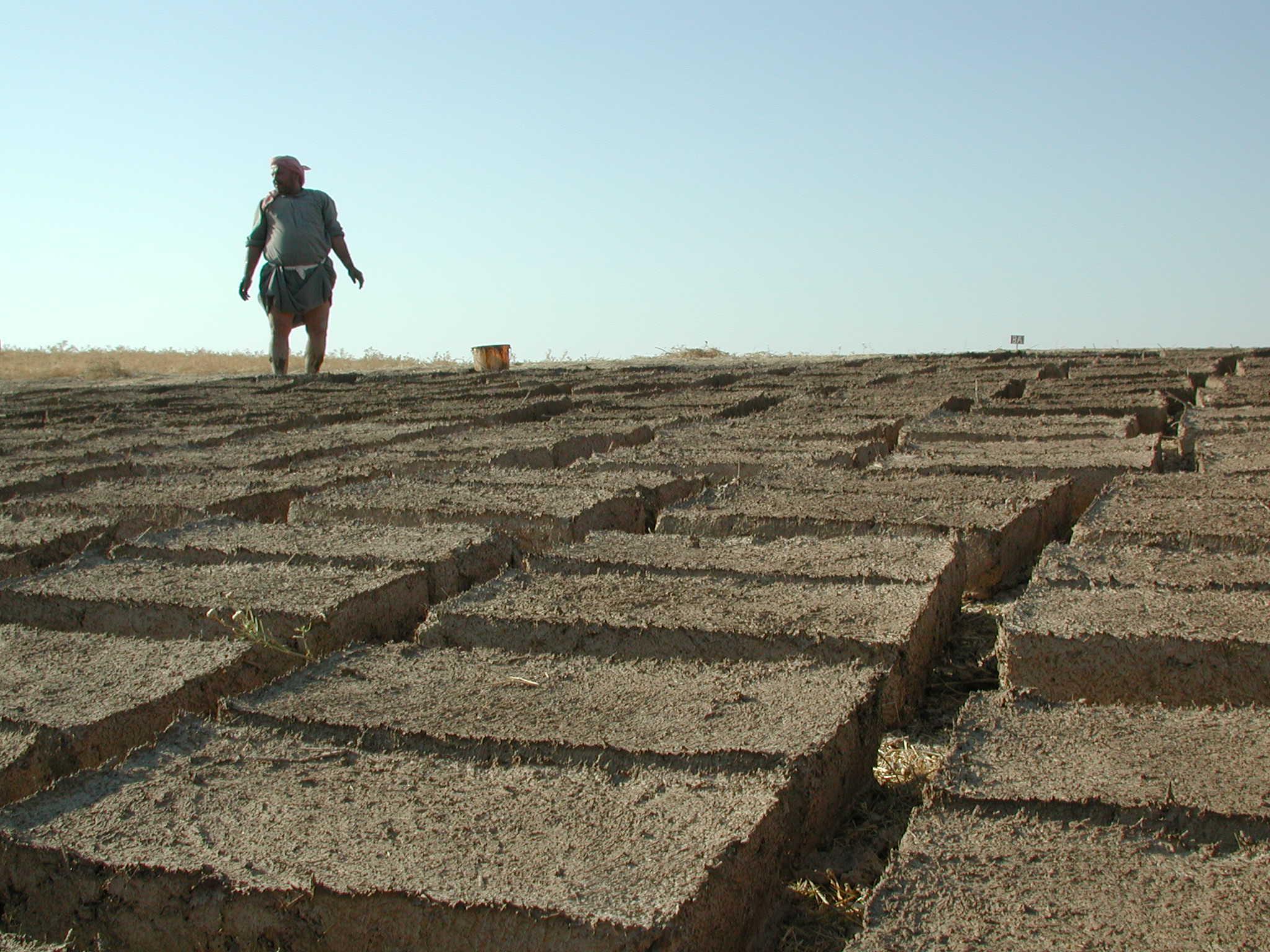 Mudbrick drying in the summer sun (Tell Mozan, Syria) | © IIMAS